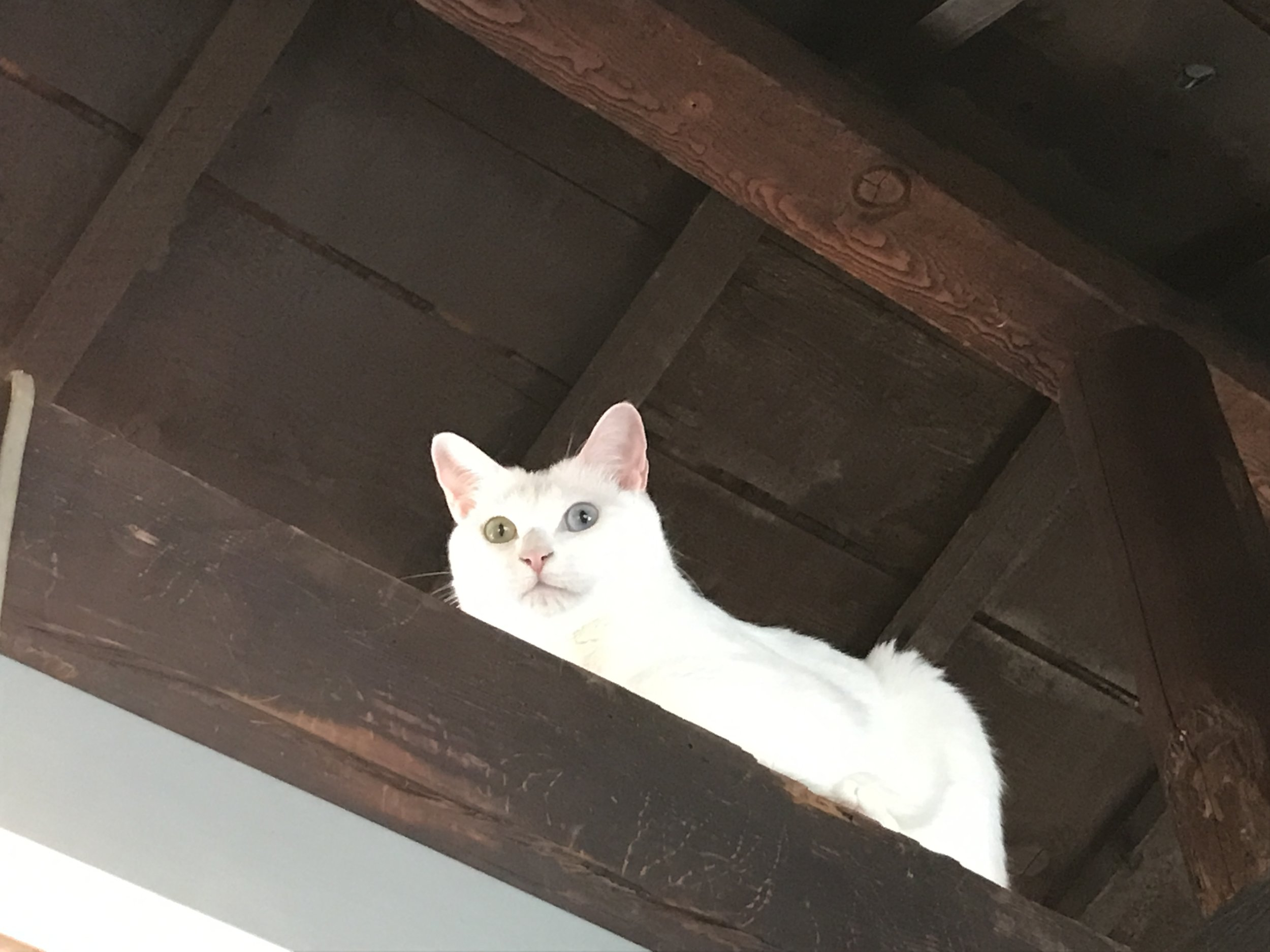 Cat Apartment Coffee-07.jpg