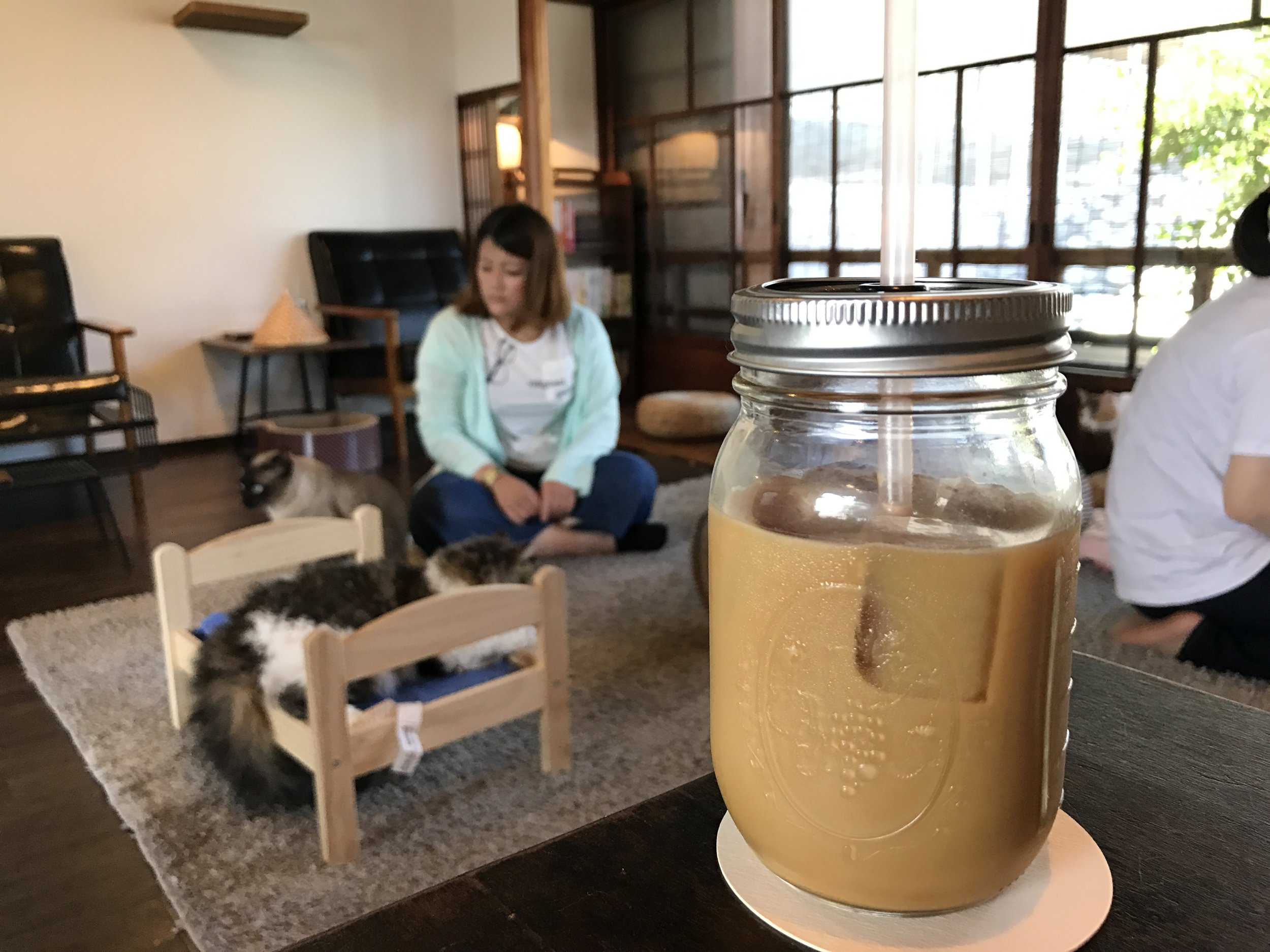 Cat Apartment Coffee-70.jpg