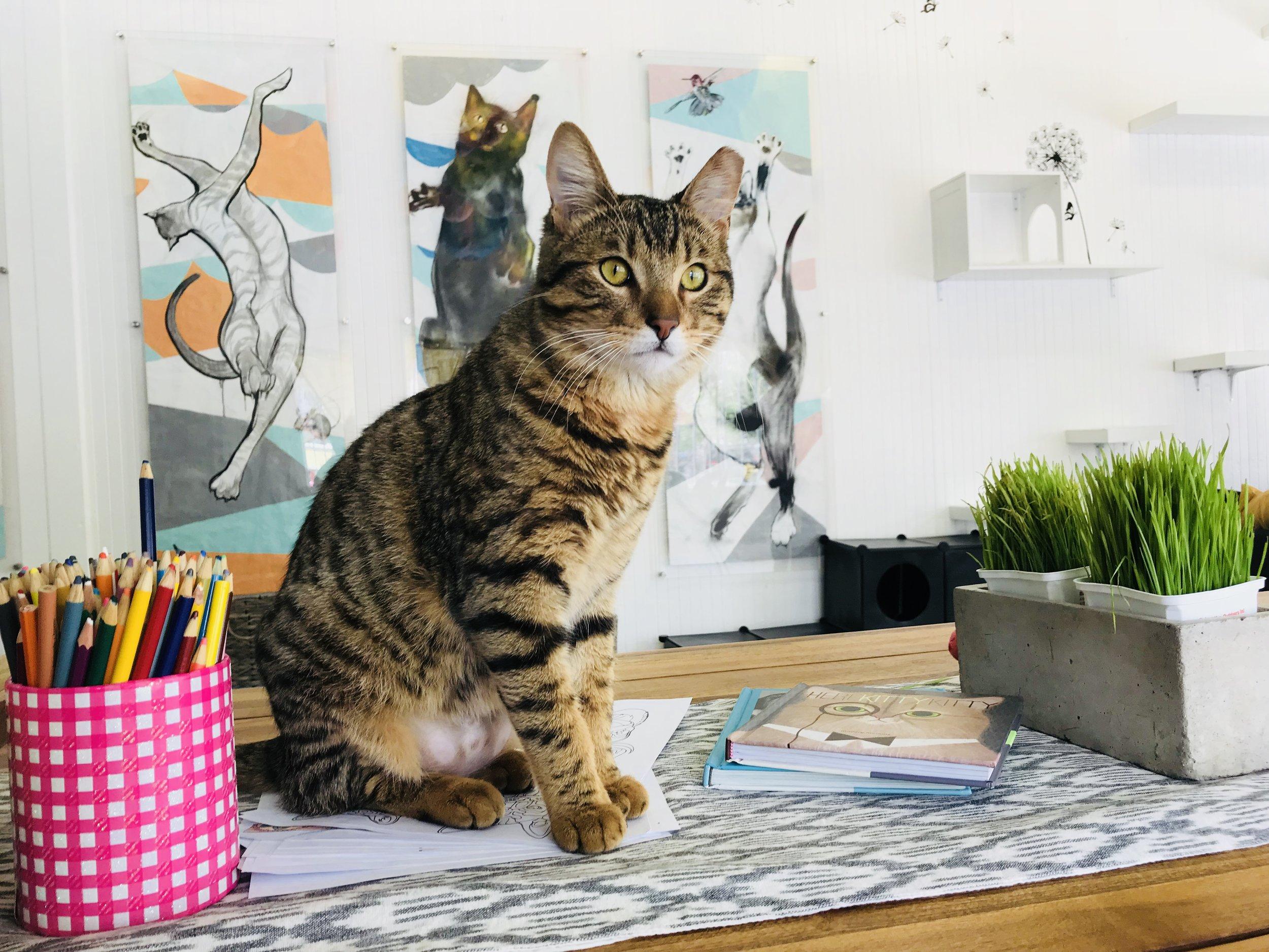 Magnificent Mowgli
