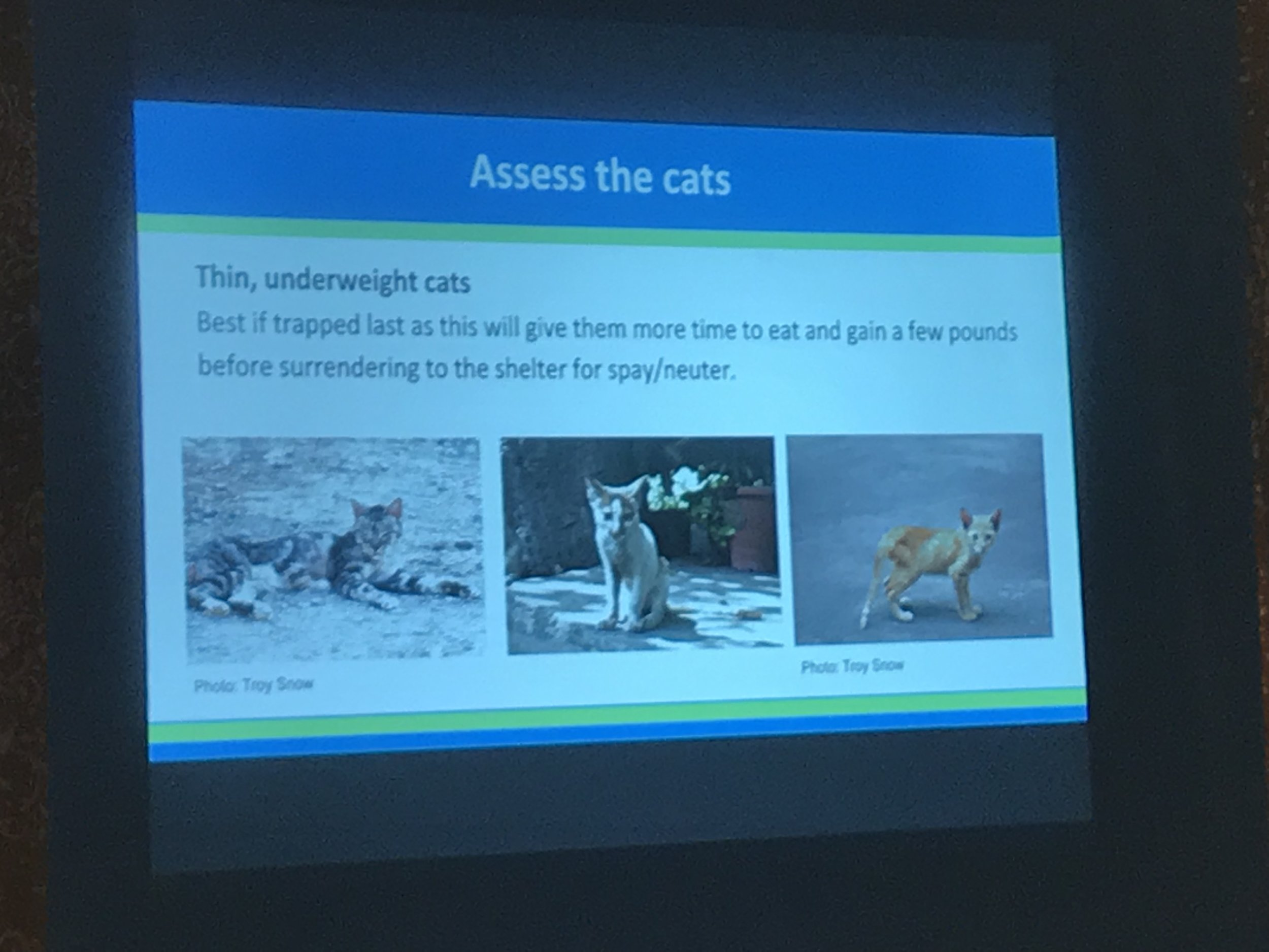 Dancing Cat presentation -19.jpg