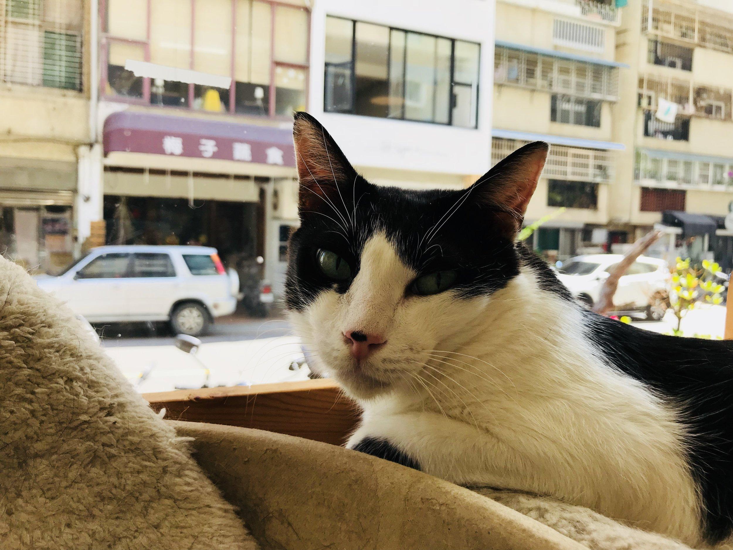 (AT) cats tea-16.jpg
