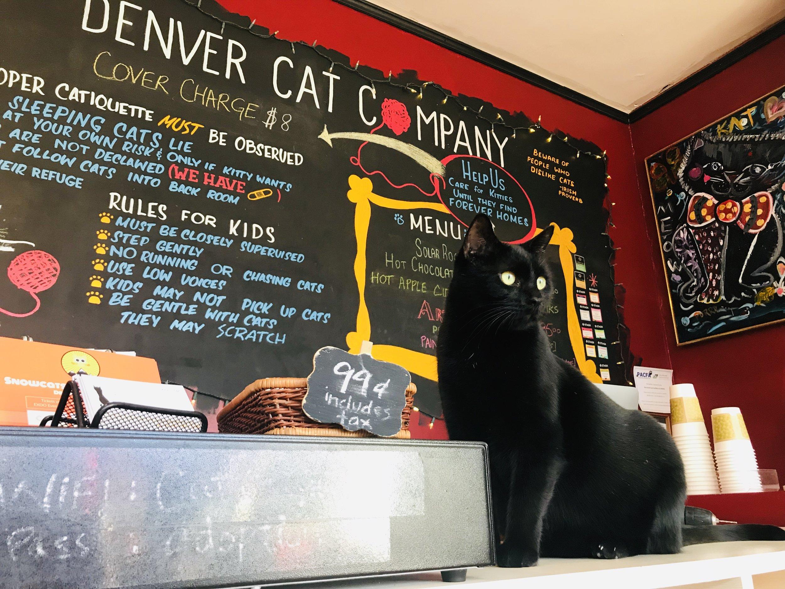 Denver Cat Company Cat Cafe Denver