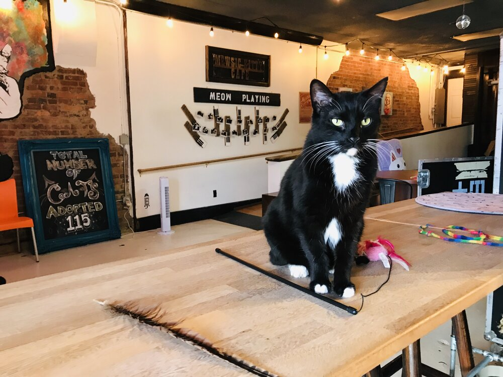 The Cat Cafes of Tennessee — The Neighbor's Cat