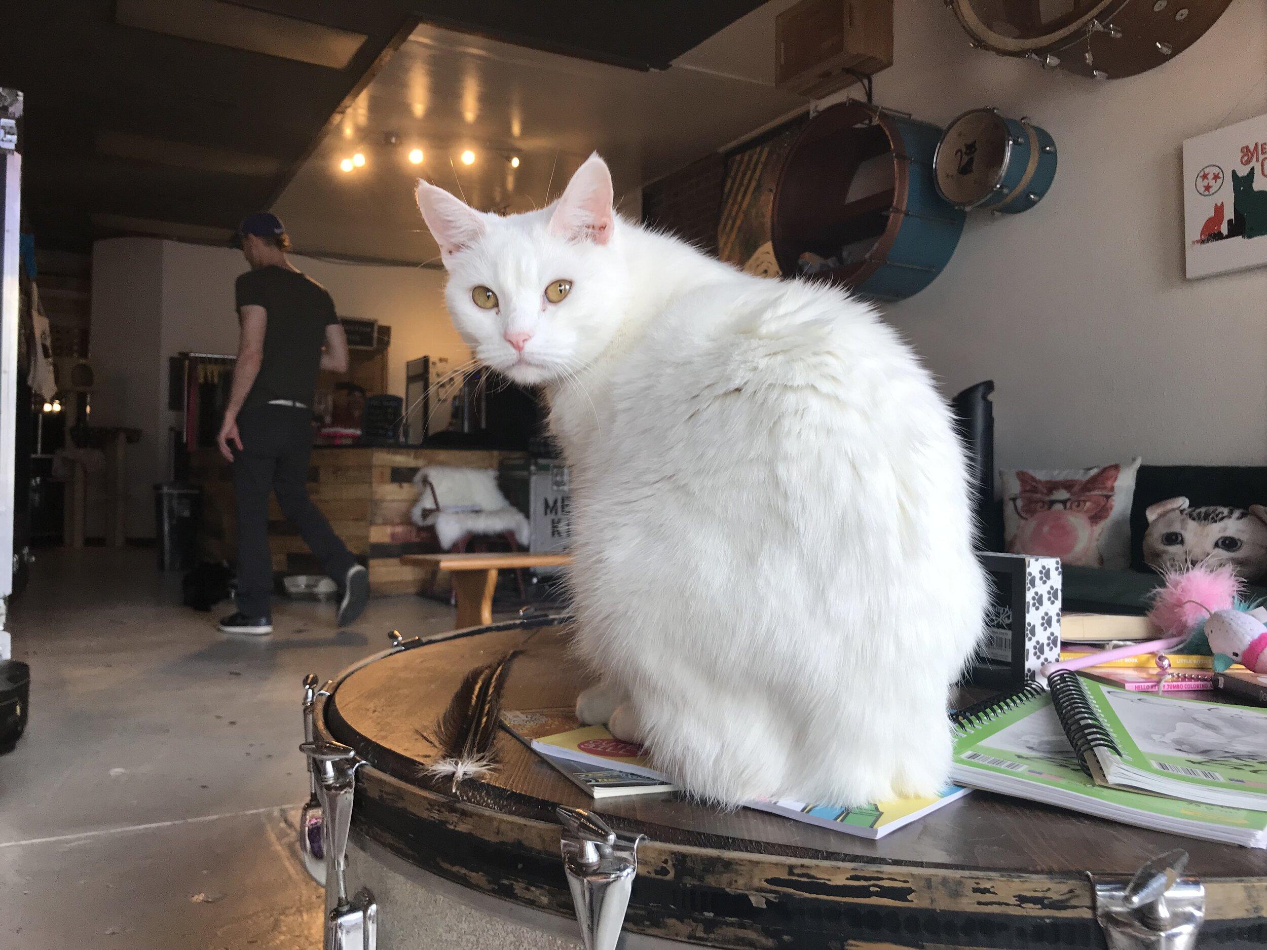 Mewsic Kitty-38.jpg