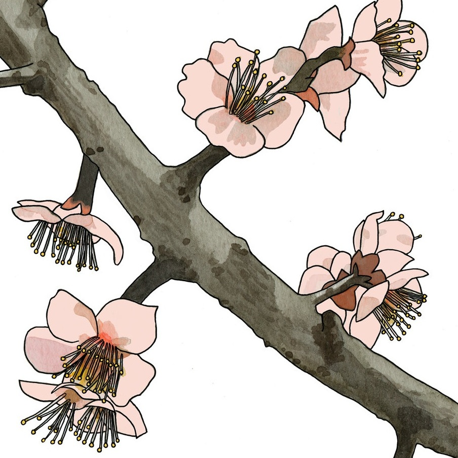 Ume no hana (Plum Blossoms)