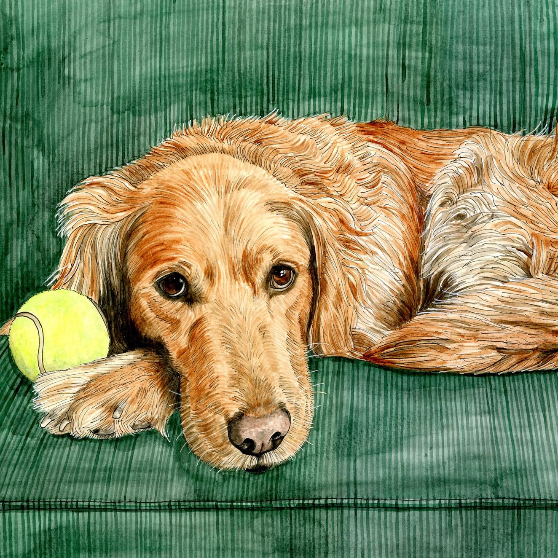 Pet Portraits: Chuy