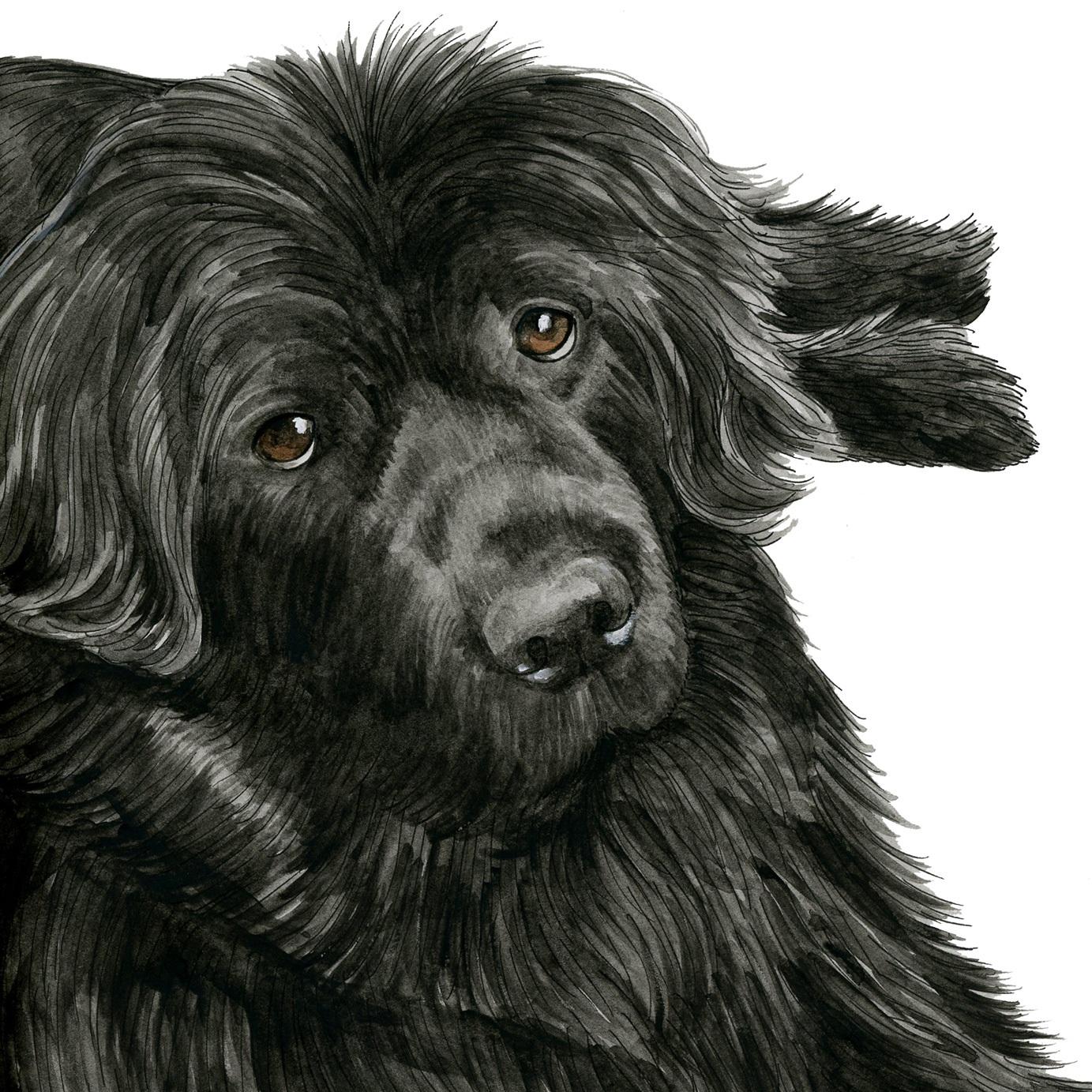 Pet Portraits: Gracie