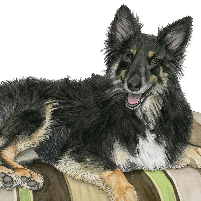 Pet Portraits: Annie