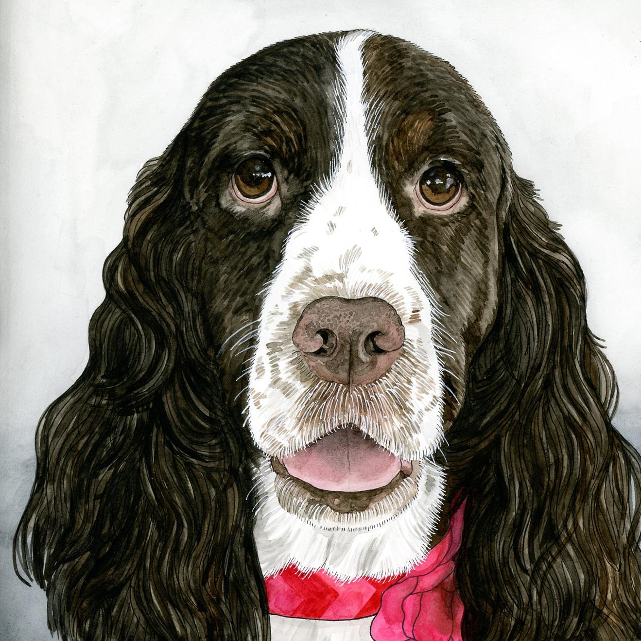 Pet Portraits: Ida