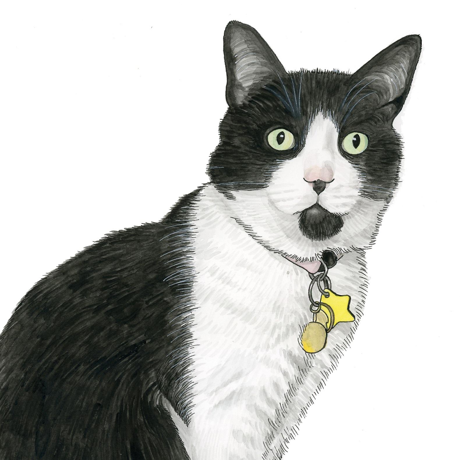 Pet Portraits: Tammy