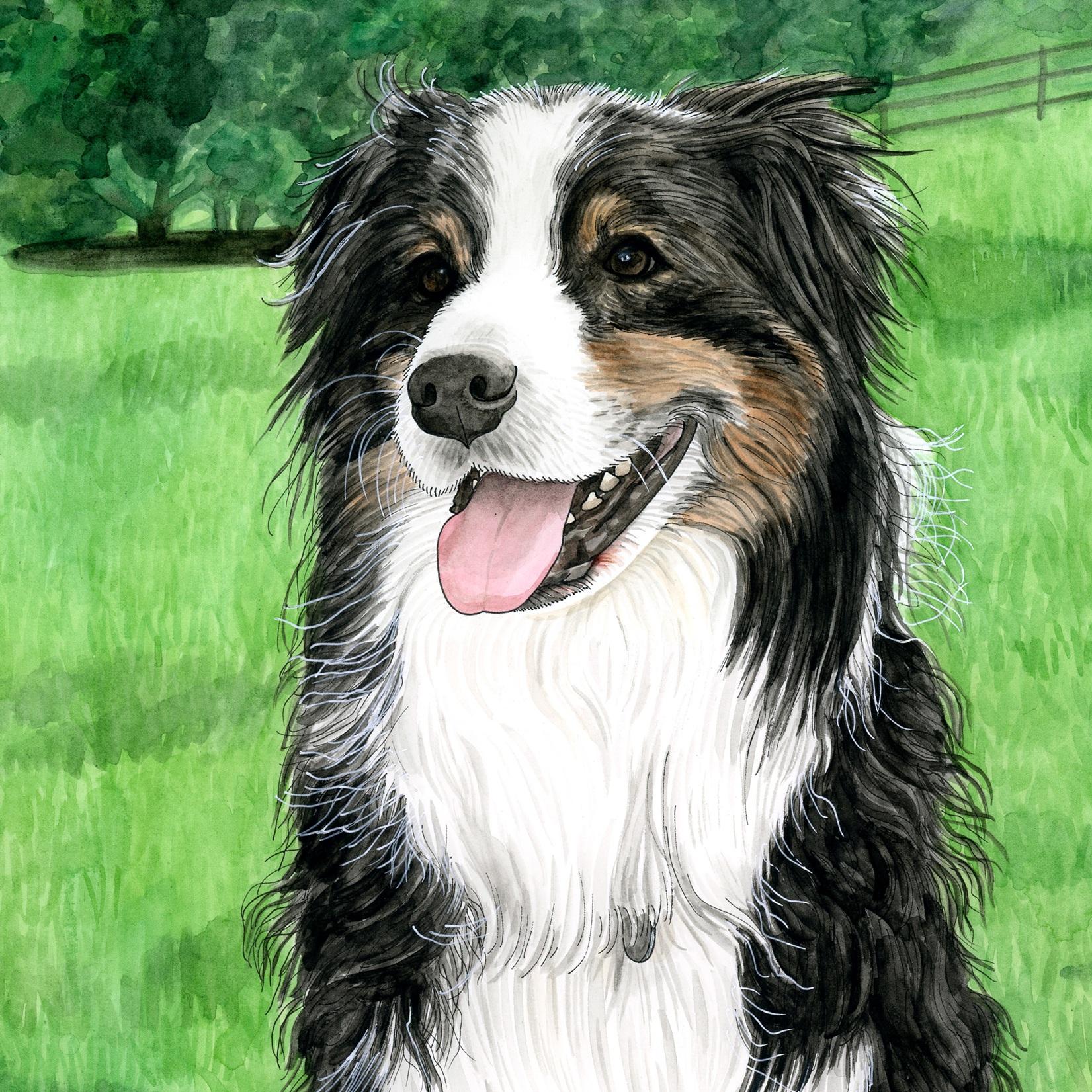 Pet Portraits: Oz