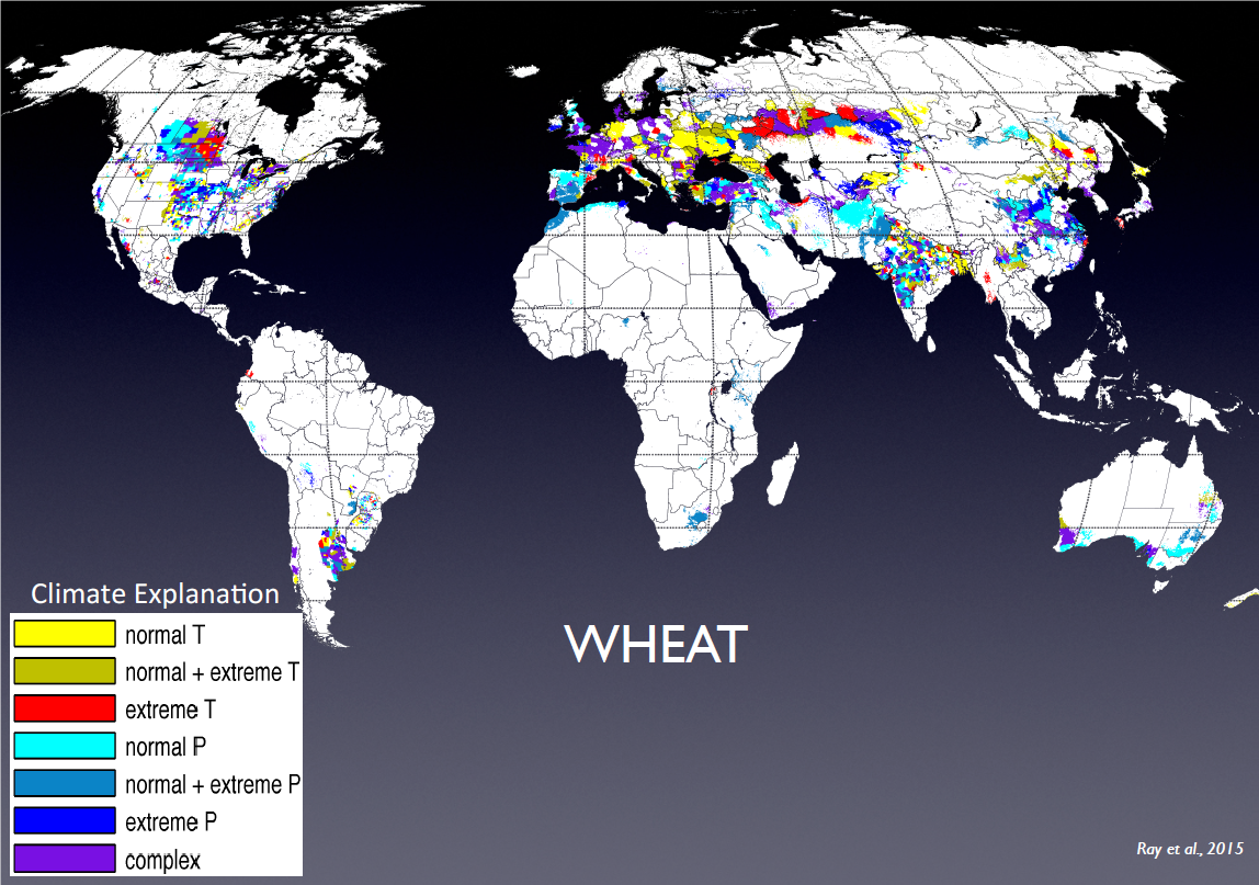 Figure 1. Types of climatic changes that most affect wheat yields across the world     Source. Based on Ray, D.K. et al (2015) Climate variation explains a third of global crop yield variability. Nature Communications 6:5989