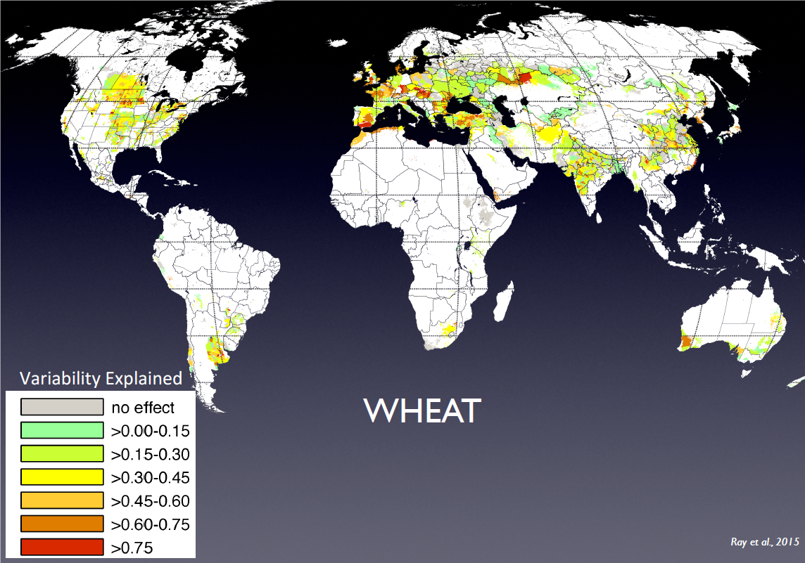Figure 2. How much of the locational variability in wheat yield is explained by temperature and rainfall changes     Source. Based on Ray, D.K. et al (2015) Climate variation explains a third of global crop yield variability. Nature Communications 6:5989