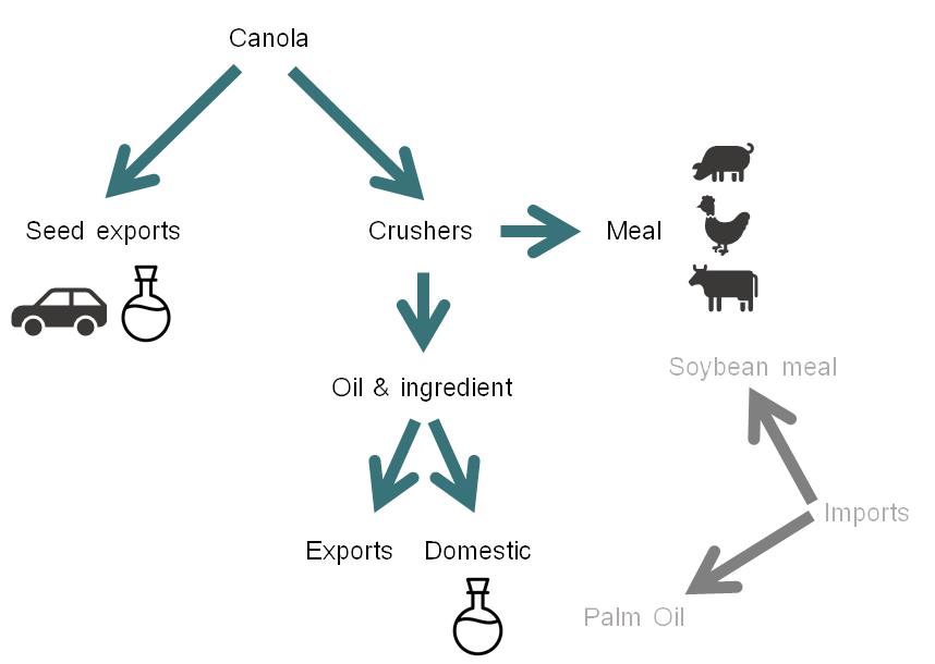 Figure 1 - The various uses of canola