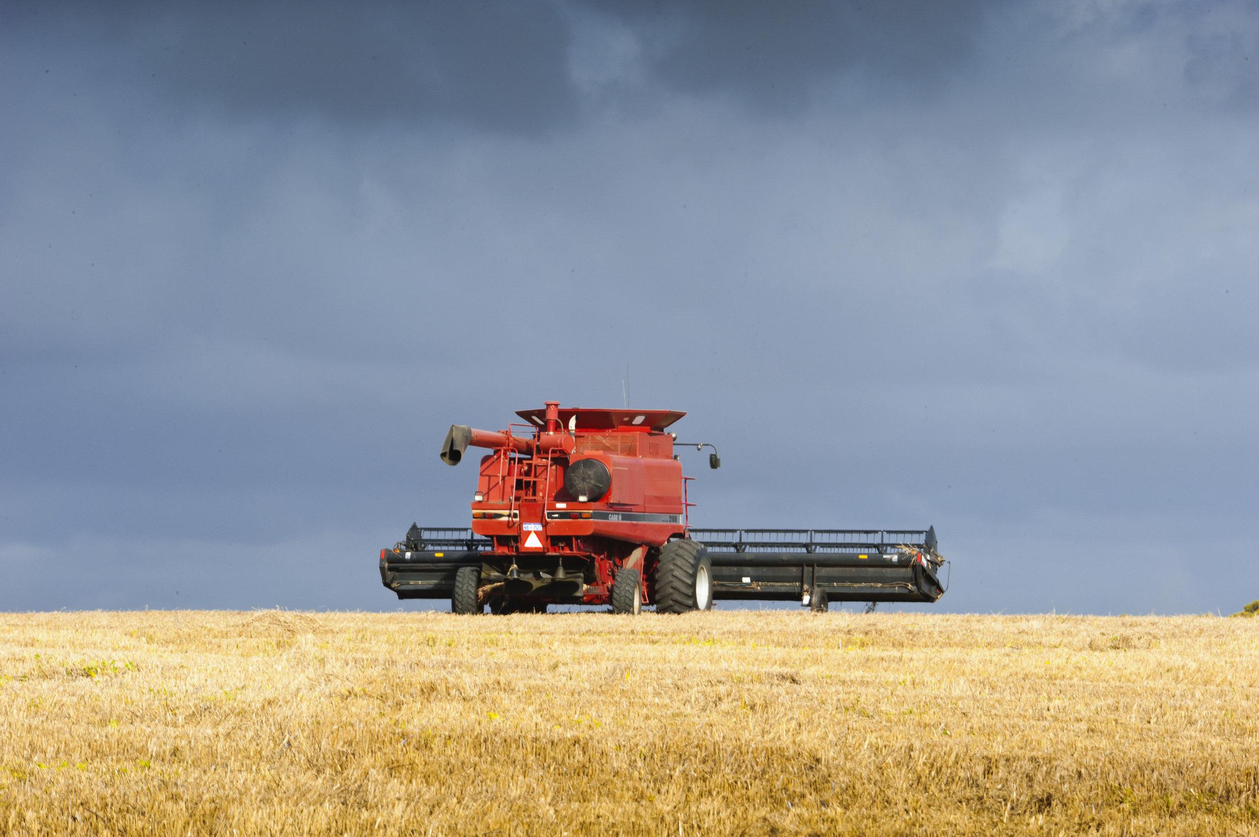 P12_0644 Harvesting.jpg
