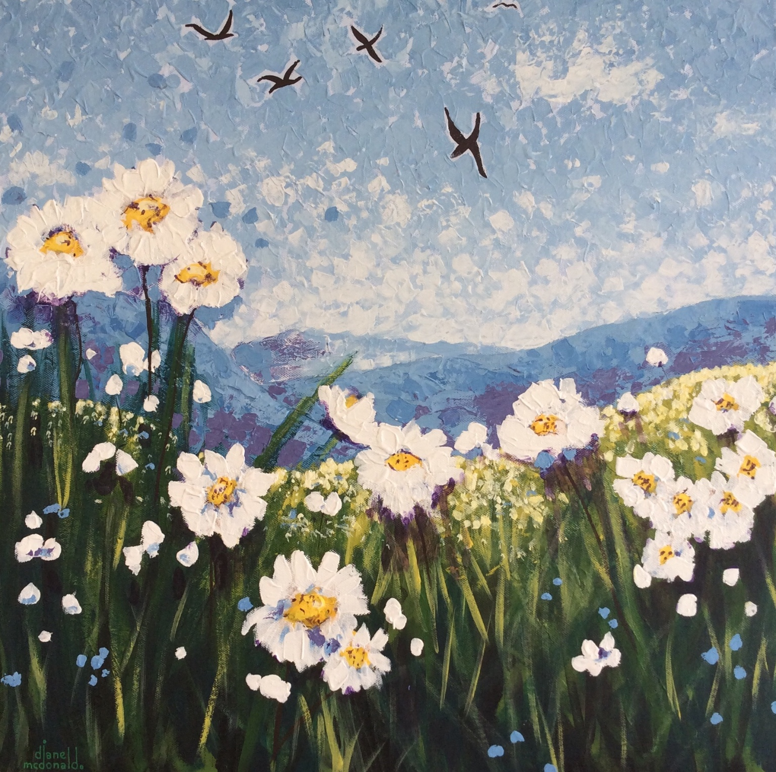 Daisies in the Fields