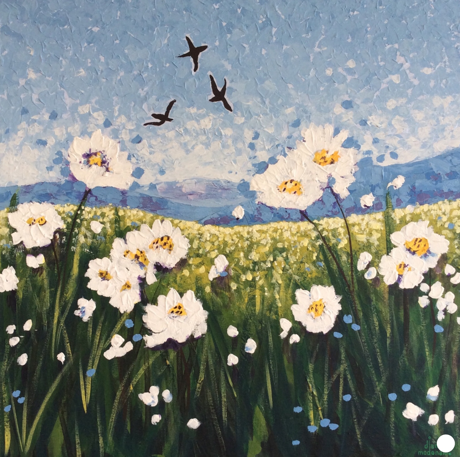 Daisies in the Fields 2