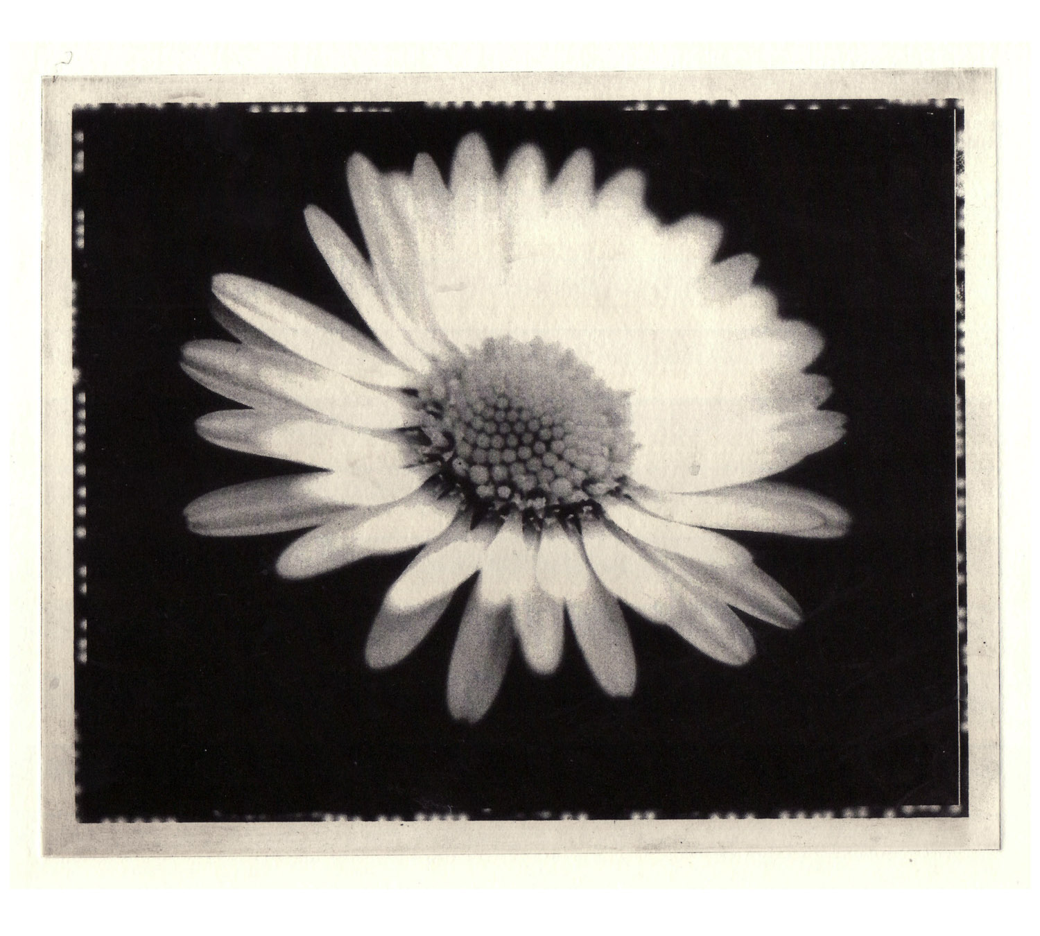 daisy-solar_plate_etching