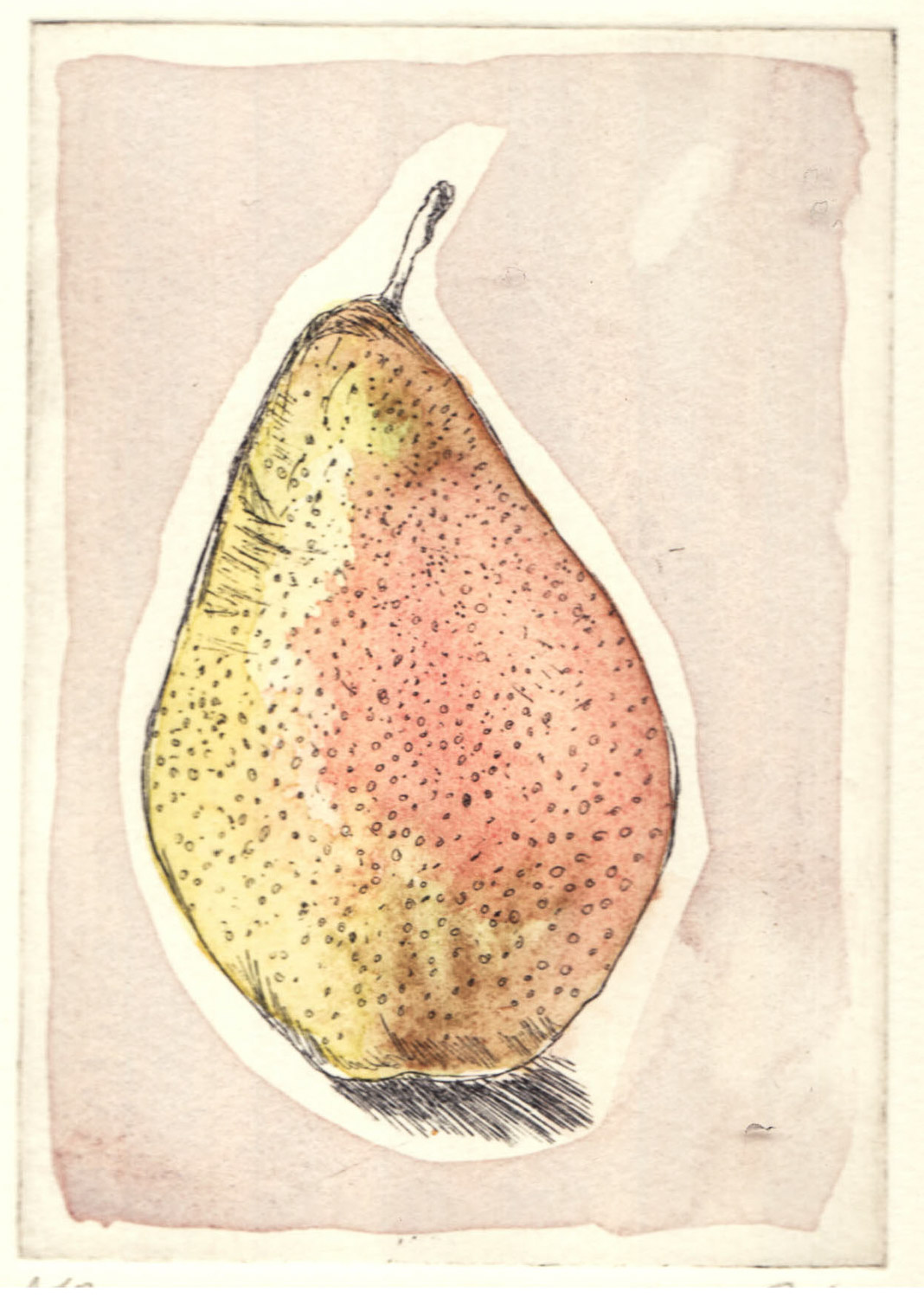 pear-etching_watercolour