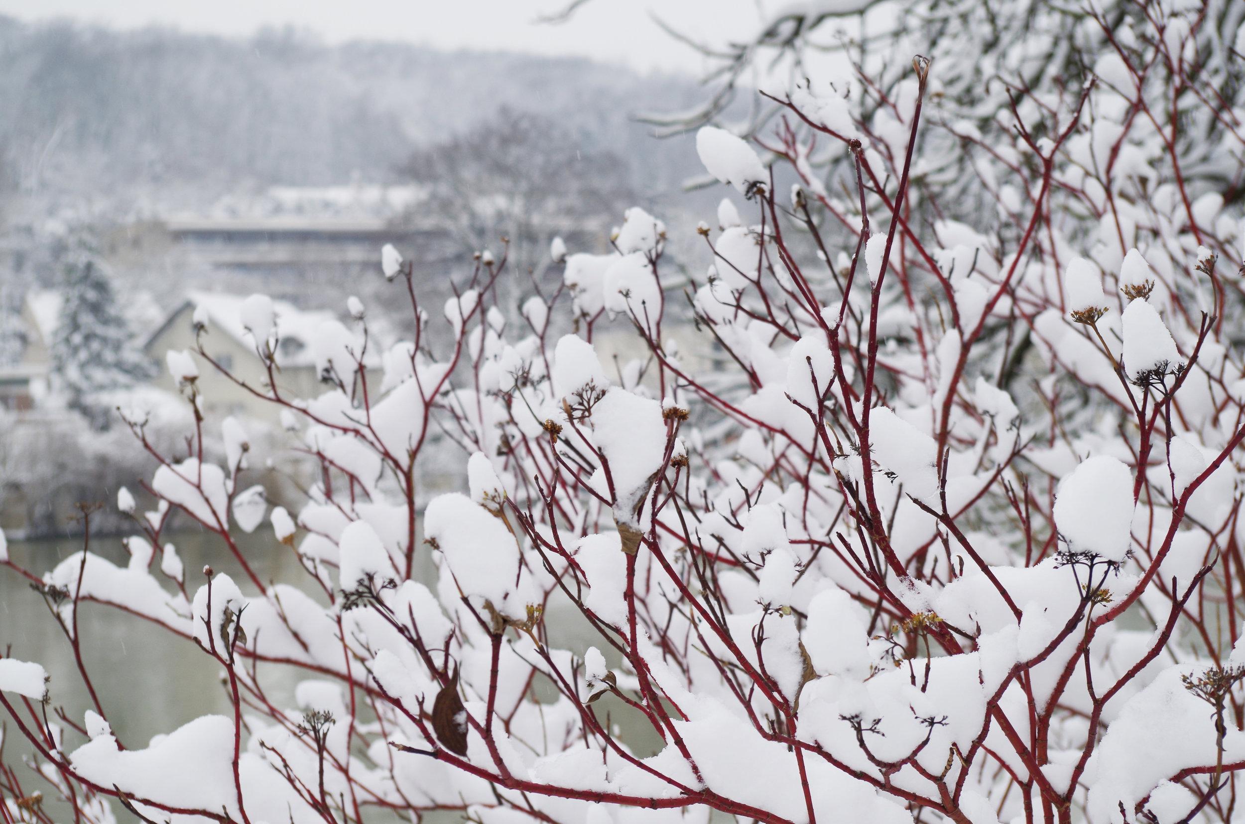 winterwonderland_janinabourosu2.jpg