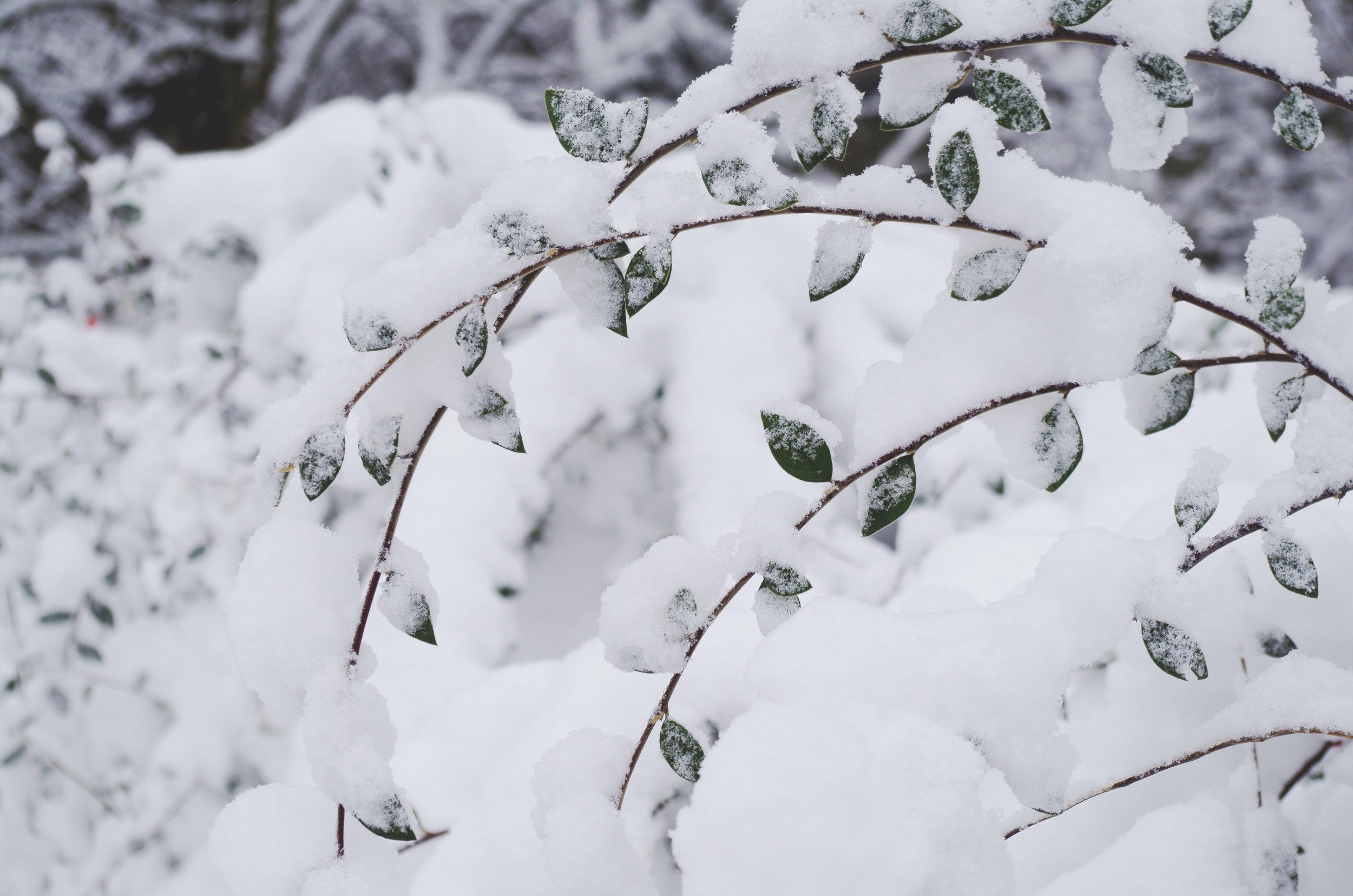 winterwonderland_janinabourosu17.jpg