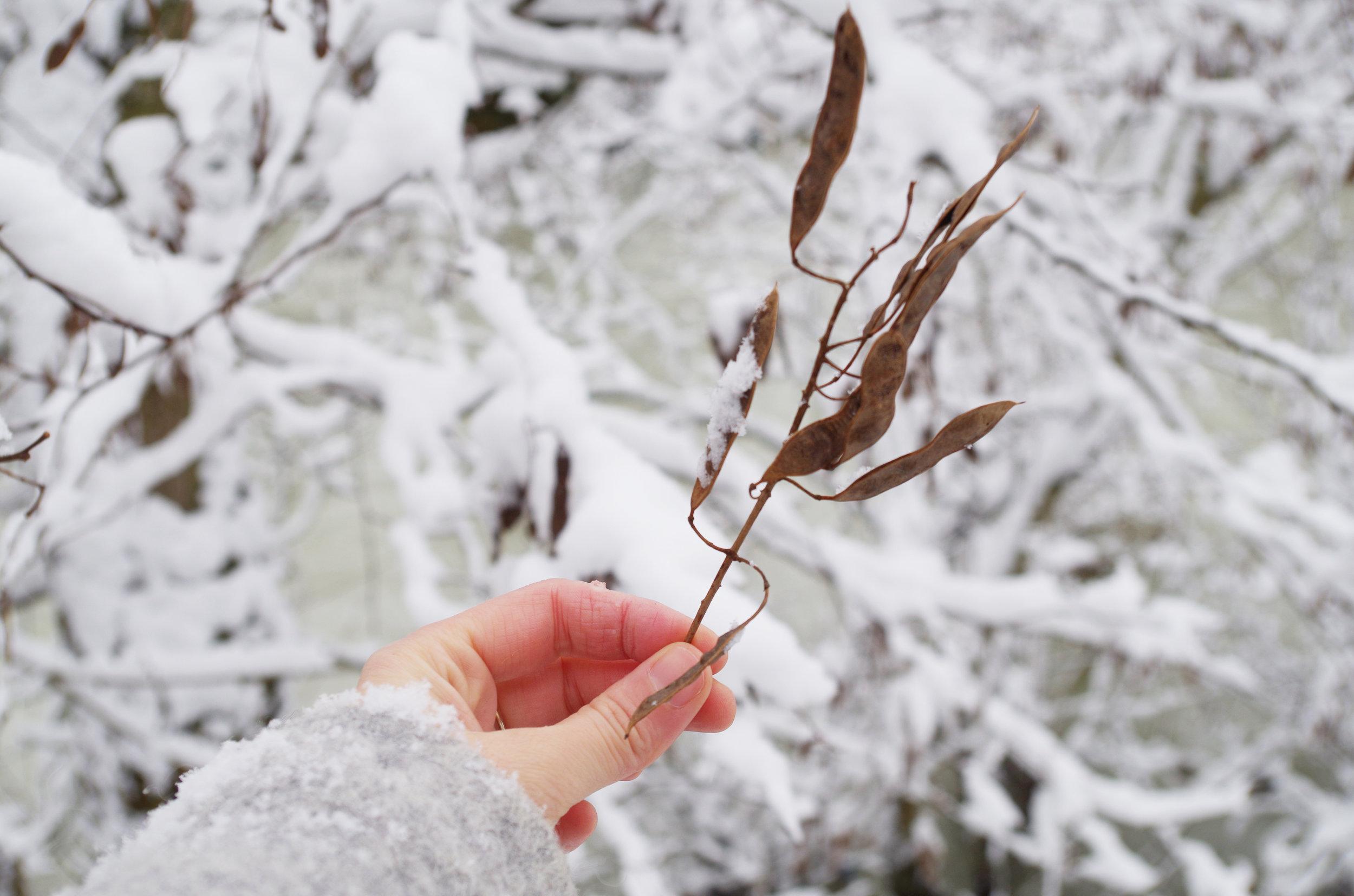 winterwonderland_janinabourosu24.jpg