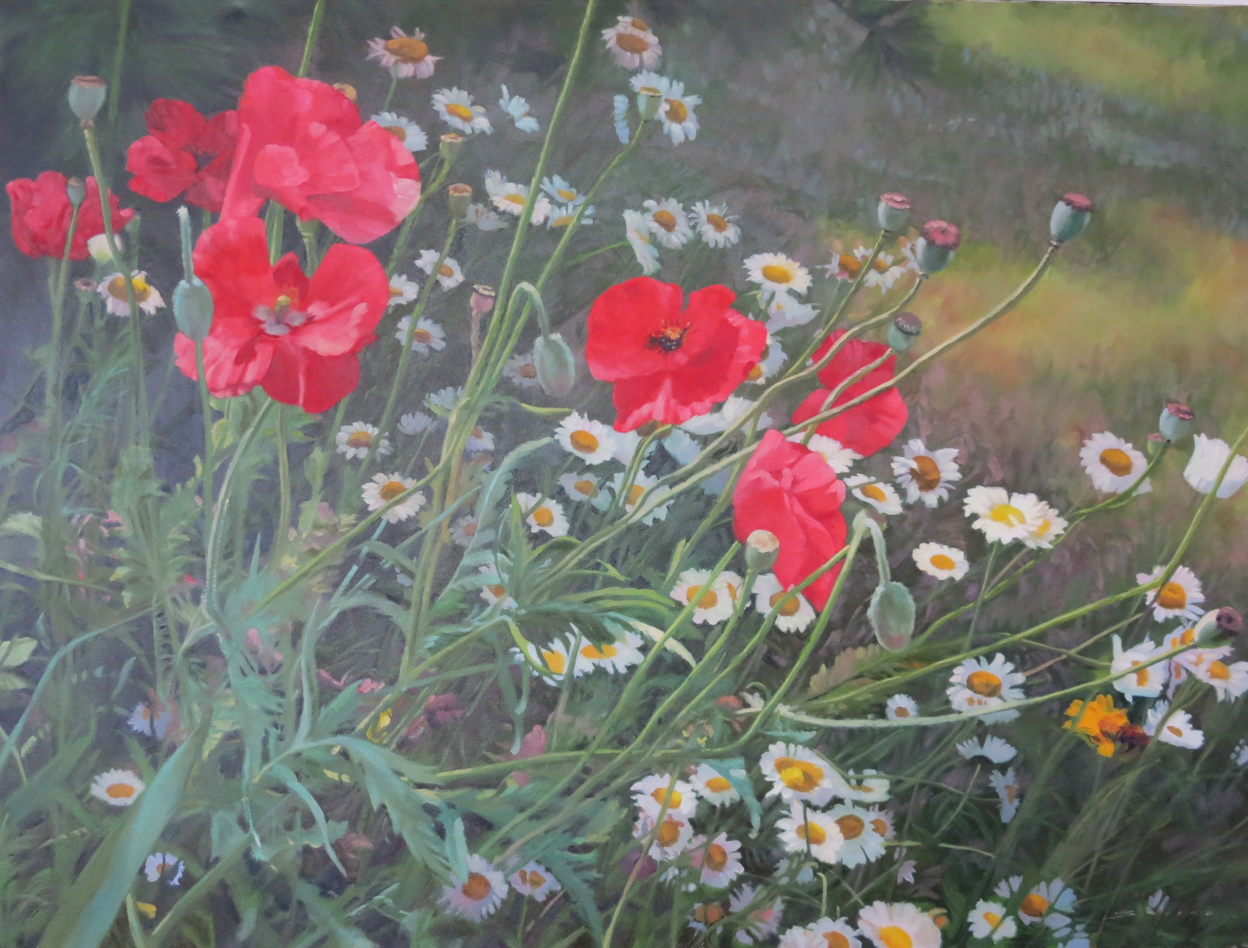 Wild Daisies/Red Poppies,  30 x 40, oil