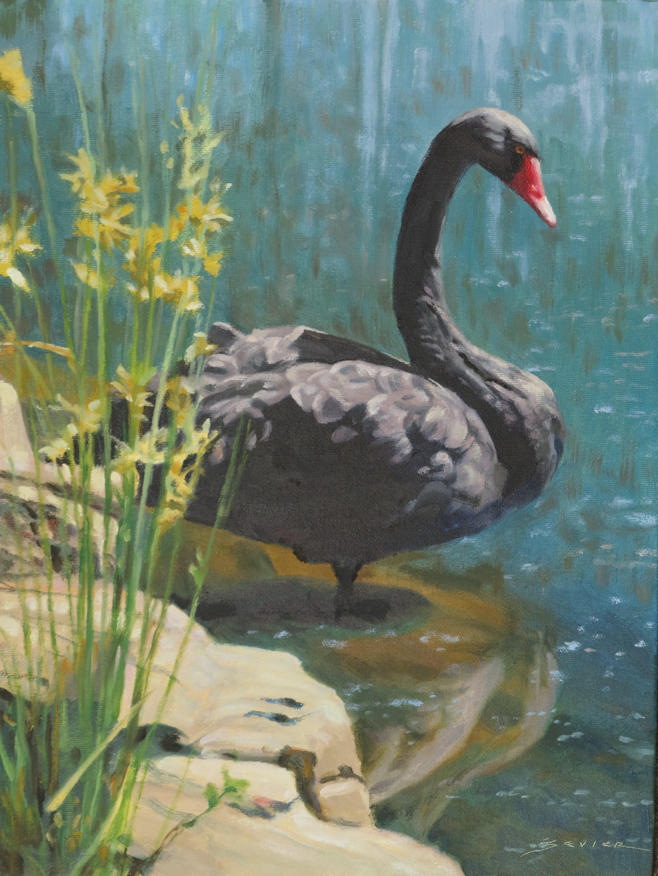 Black Swan/Dunkeld S.A., 16 x 12, oil