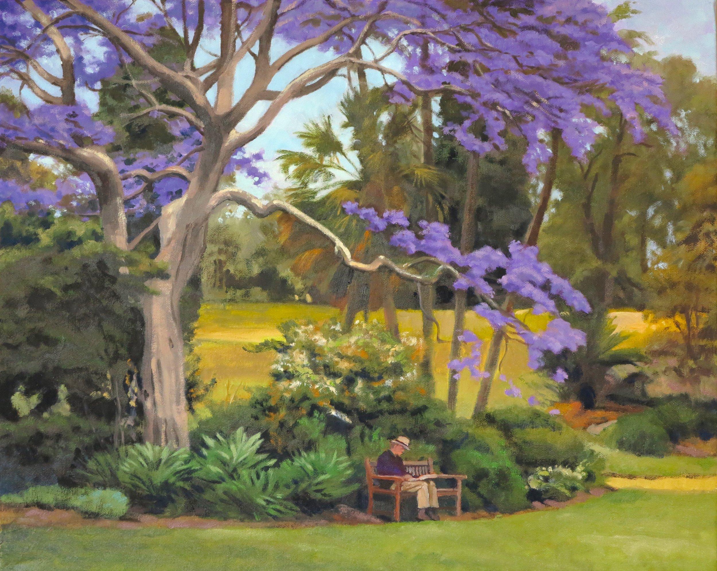 Jacaranda Tree/Sidney, 16 x 20, oil