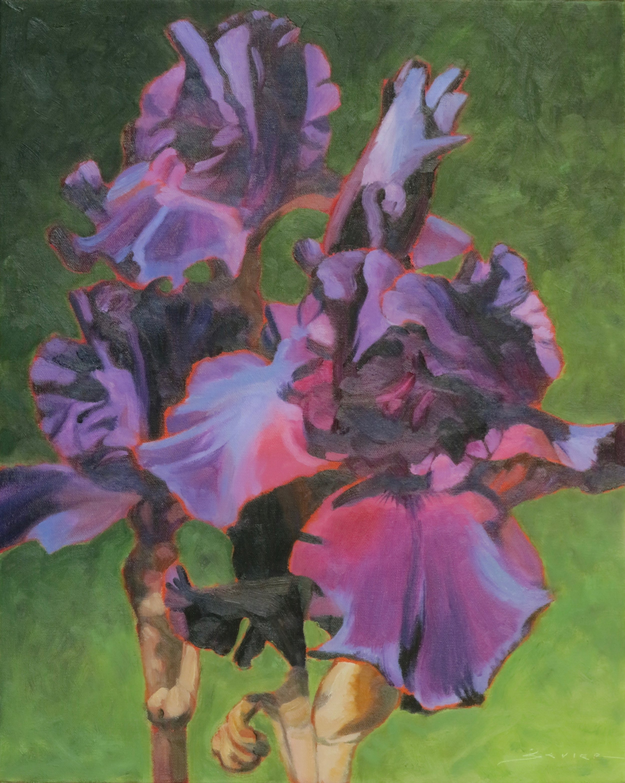 "Purple Irises  20"" x 16""  oil"