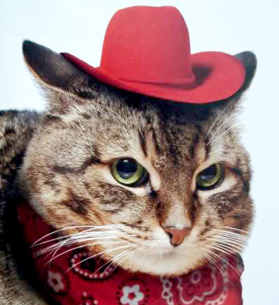 CATS FROM TEXAS