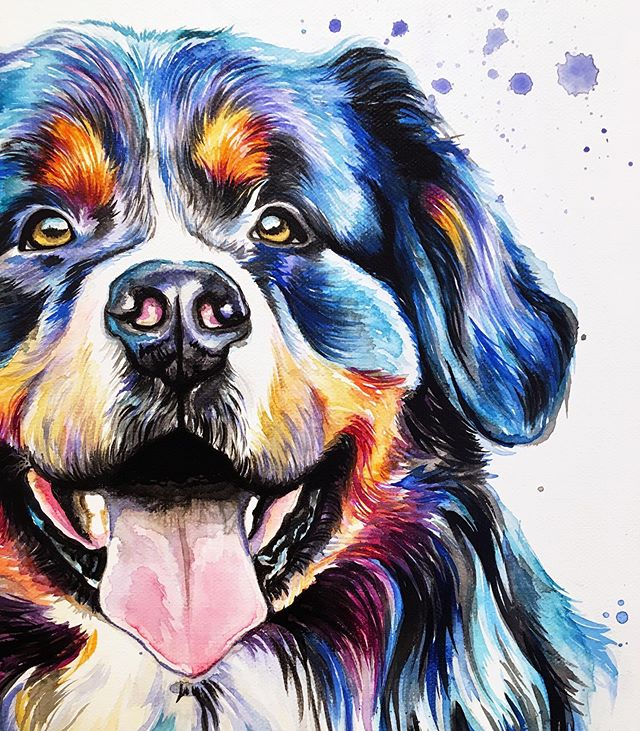 We have another Berner in the LM Art fam!🐶💙 . . . . . . . . . . . . #LindsayMichelleART #BerneseMountainDog #petportrait #memorialpainting #petpainting #dogpainting #dogart #homedecor #commissioned #custom #animalpainting #houstonartist #animalart #animalartwork #art #artist #artwork #watercolor #ink #instaart #instaartoftheday #artcollective #artistofinstagram #worldofartists #arthomepage #dailyarts #artwork_in_studio #artfeature
