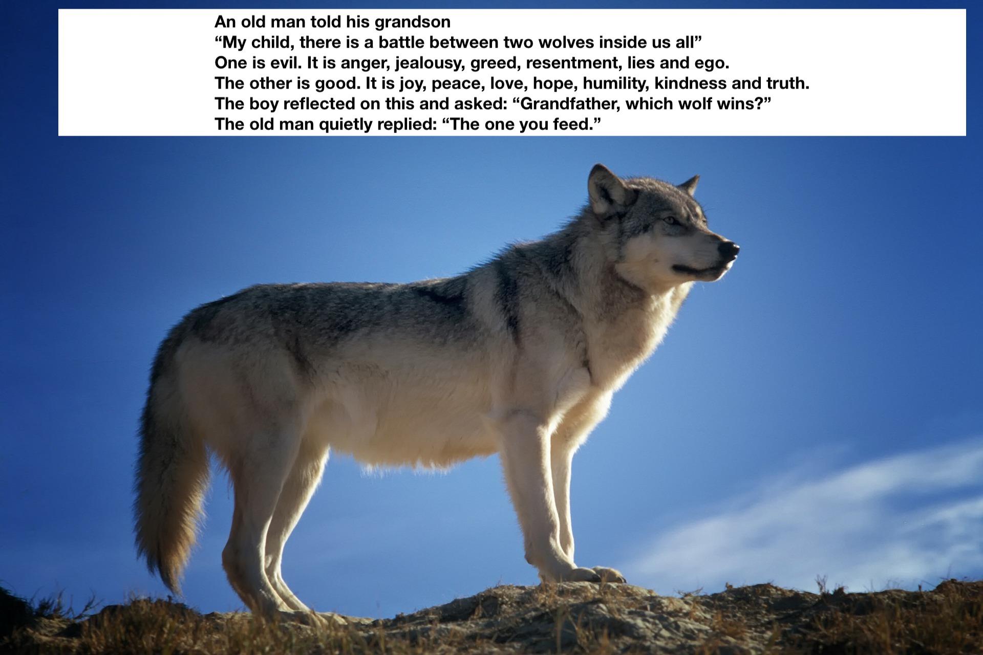 2 wolves image JPEG.jpg
