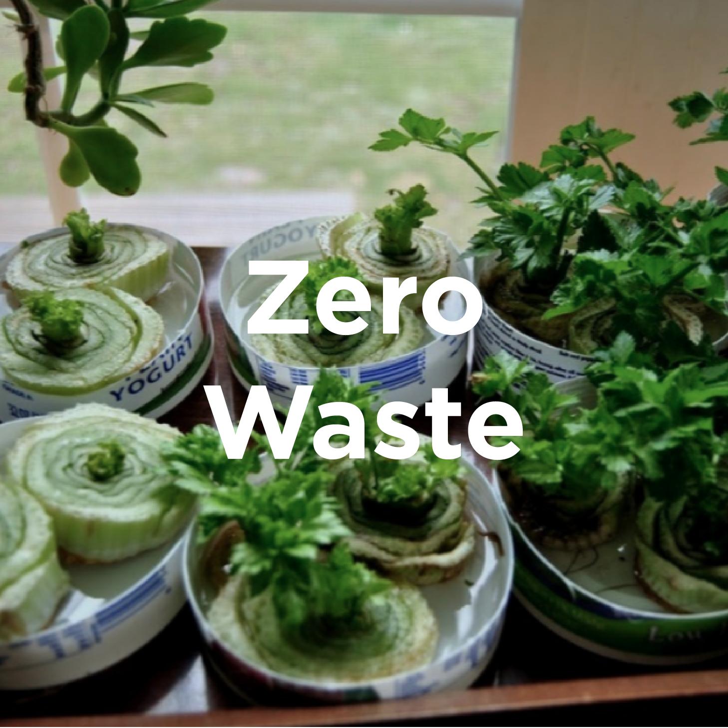 Zero Waste Initiatives