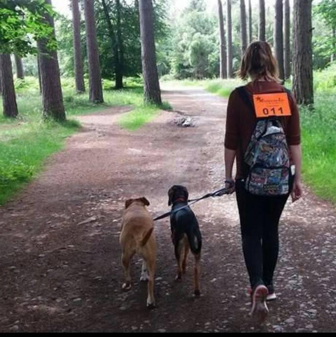 Dog-walking-in-woods