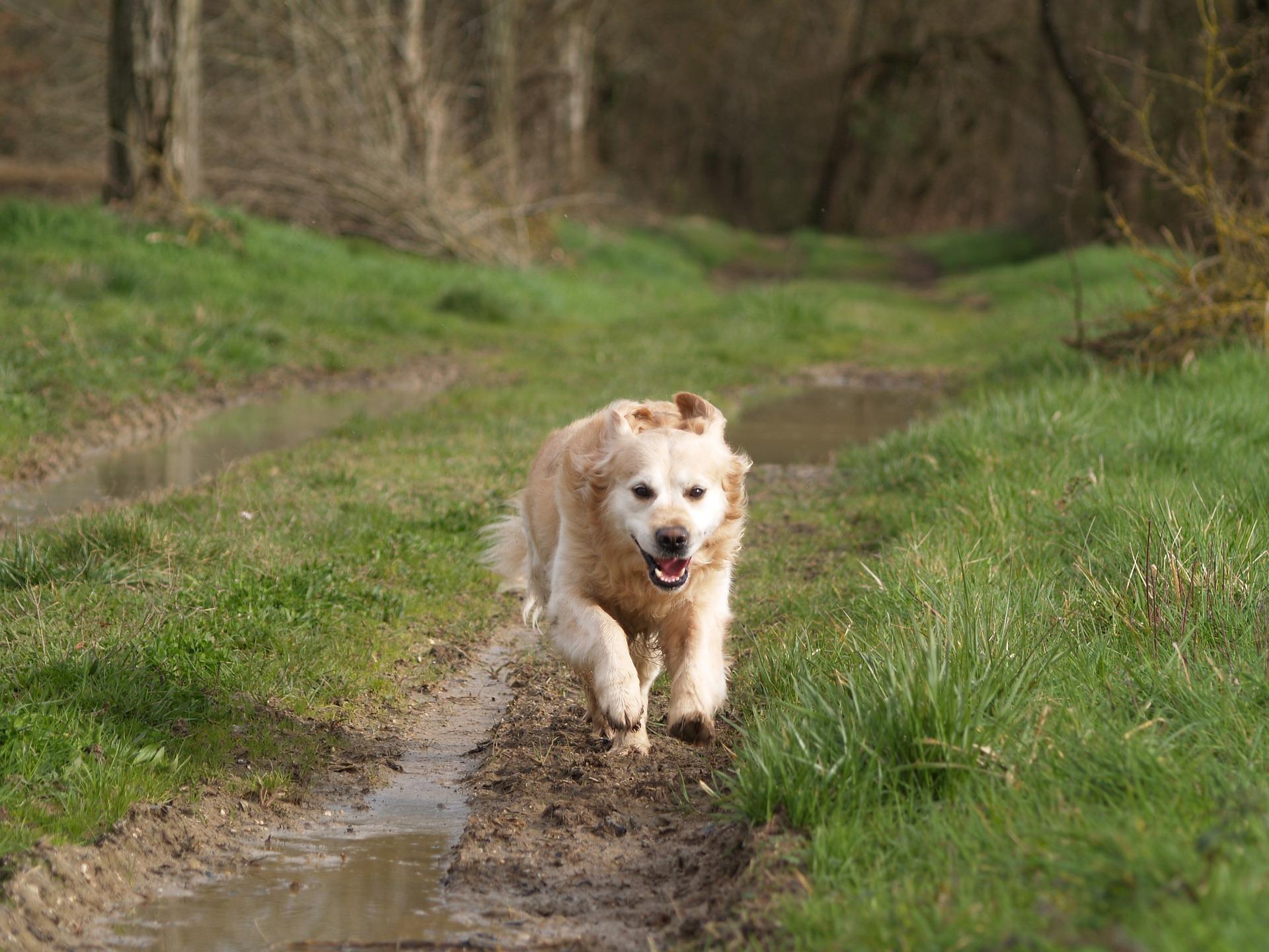 dog-walking-walsall