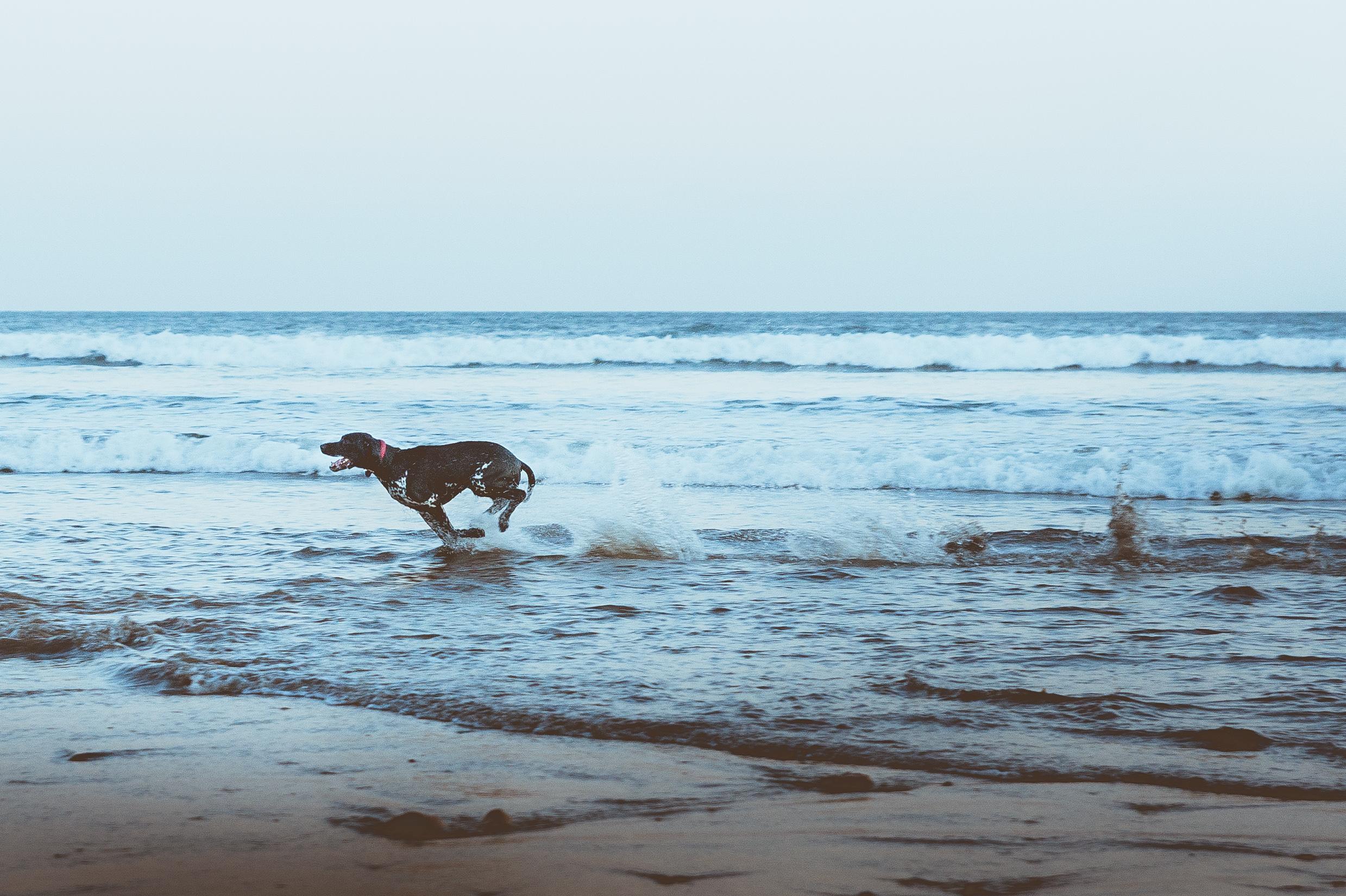 dog-walks-off-lead
