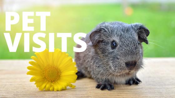 Pet-visits