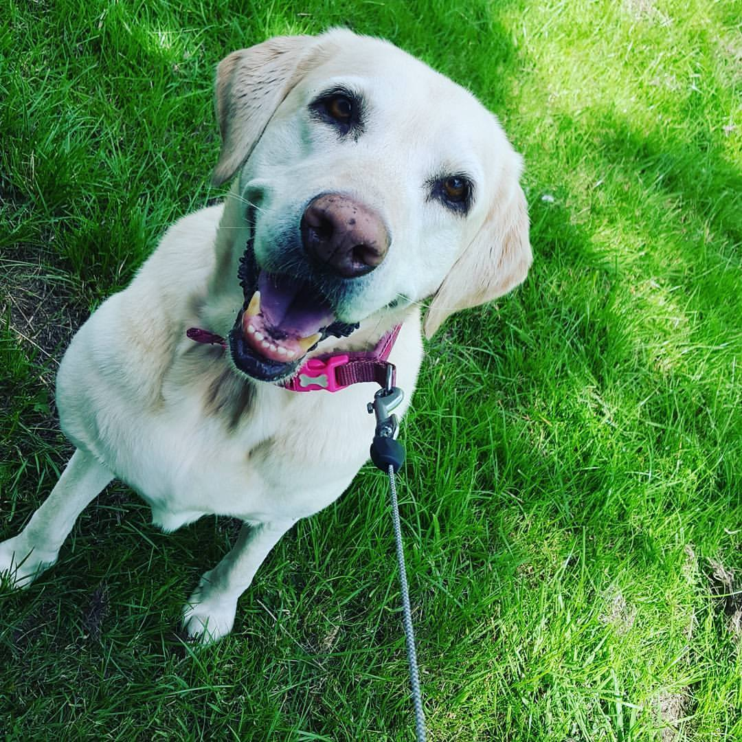 Dog-walking-large-breeds
