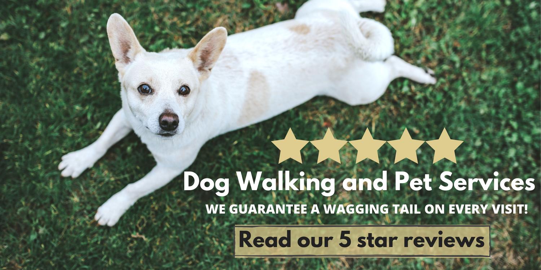 Five Star Dog Walking