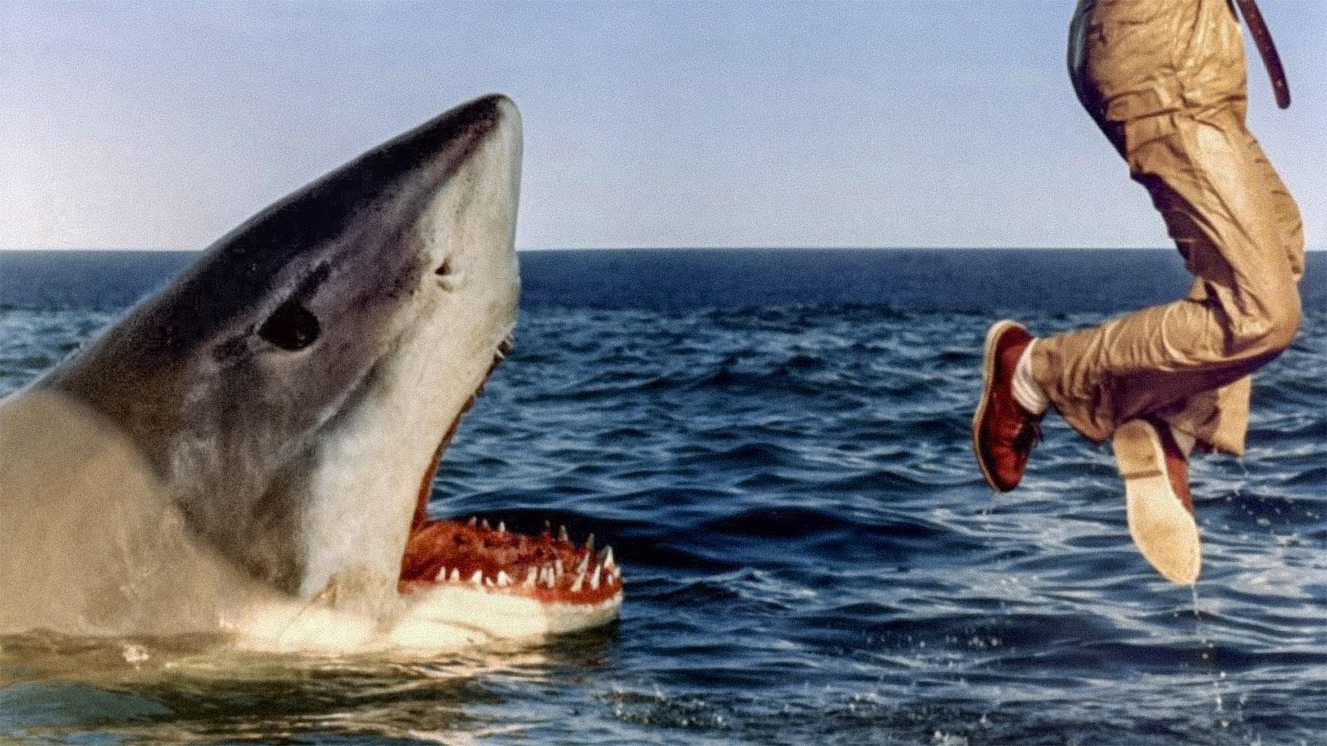 last-shark.jpg