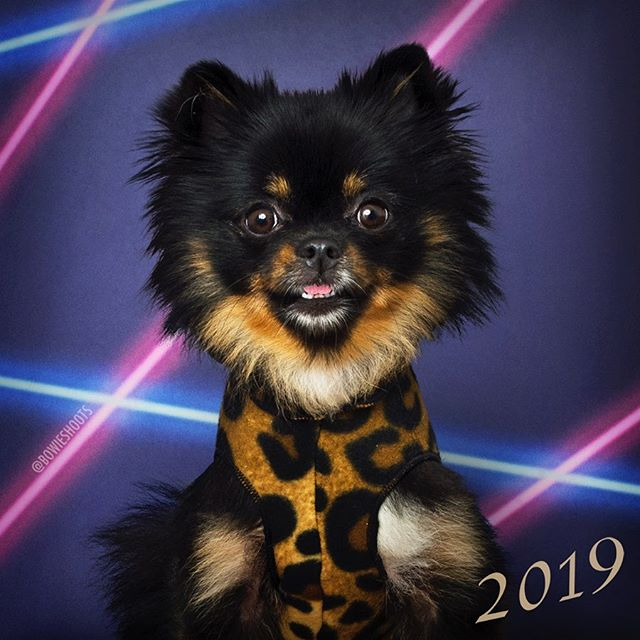 Mokutan is totally on top of the leopard print trend🐆😎// @mokutan_chan . . . Want your very own school pawtrait? We host Picture Day's 1-2x a month in the East Village! DM us for more information📸✨ #bowieshoots