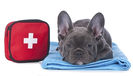 Pet First Aid Training Royal Pooch