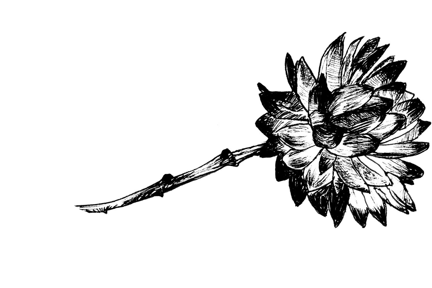 FLEUR-noir.png
