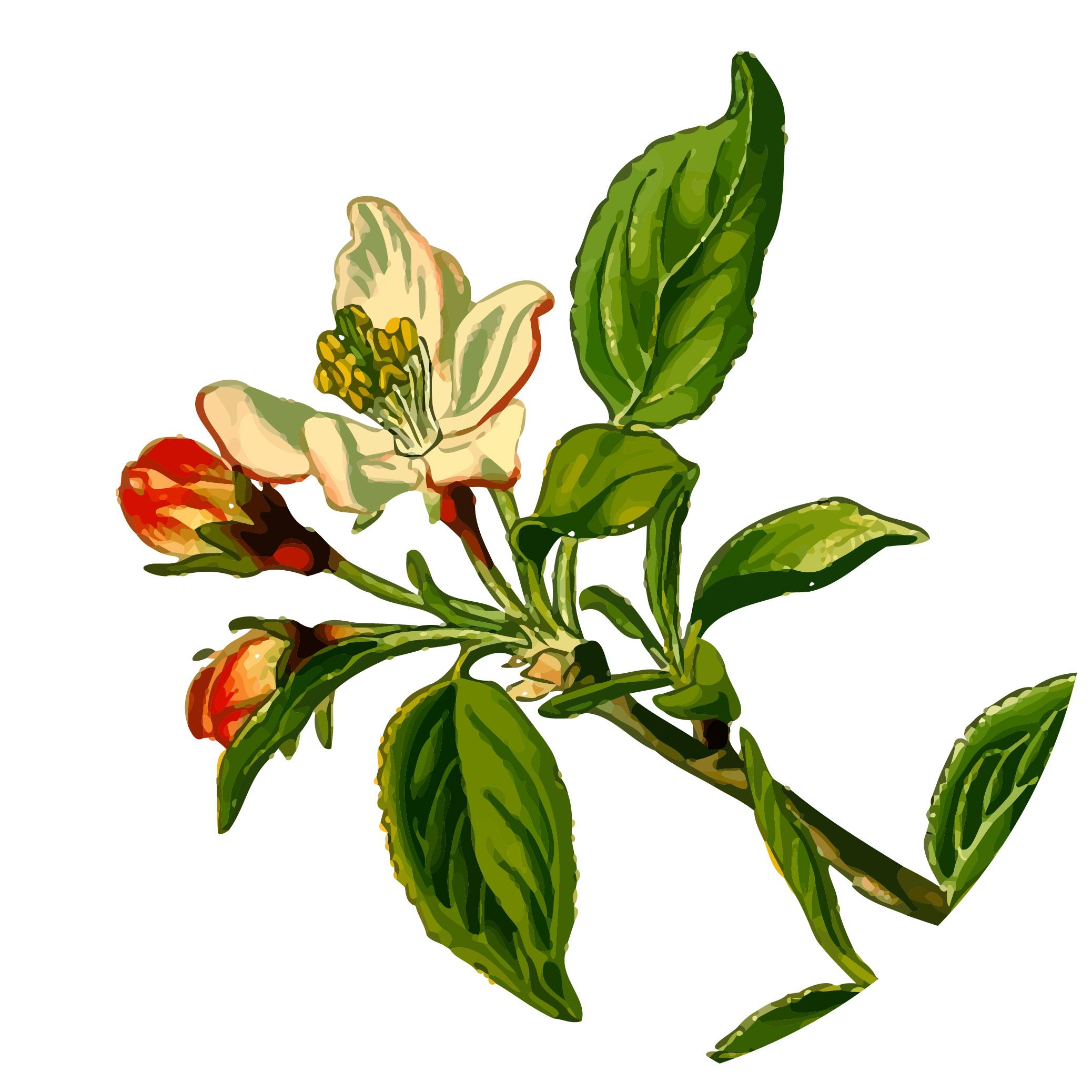 apple-1300026.jpg