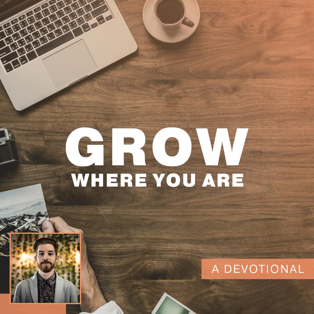 grow where you are.jpg