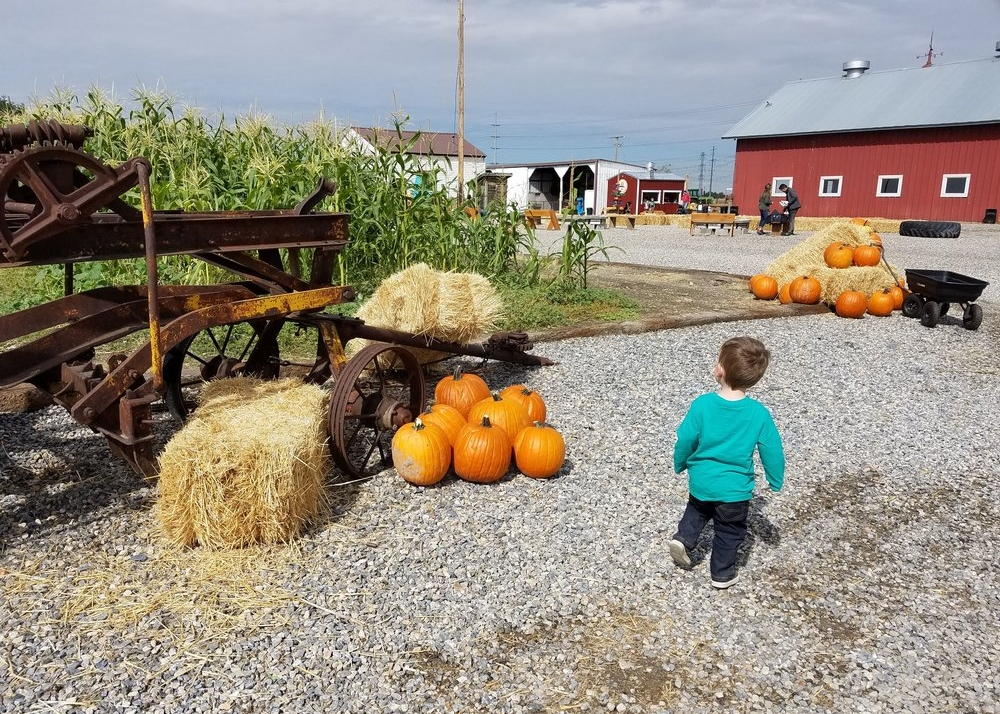 fall fun in davis county
