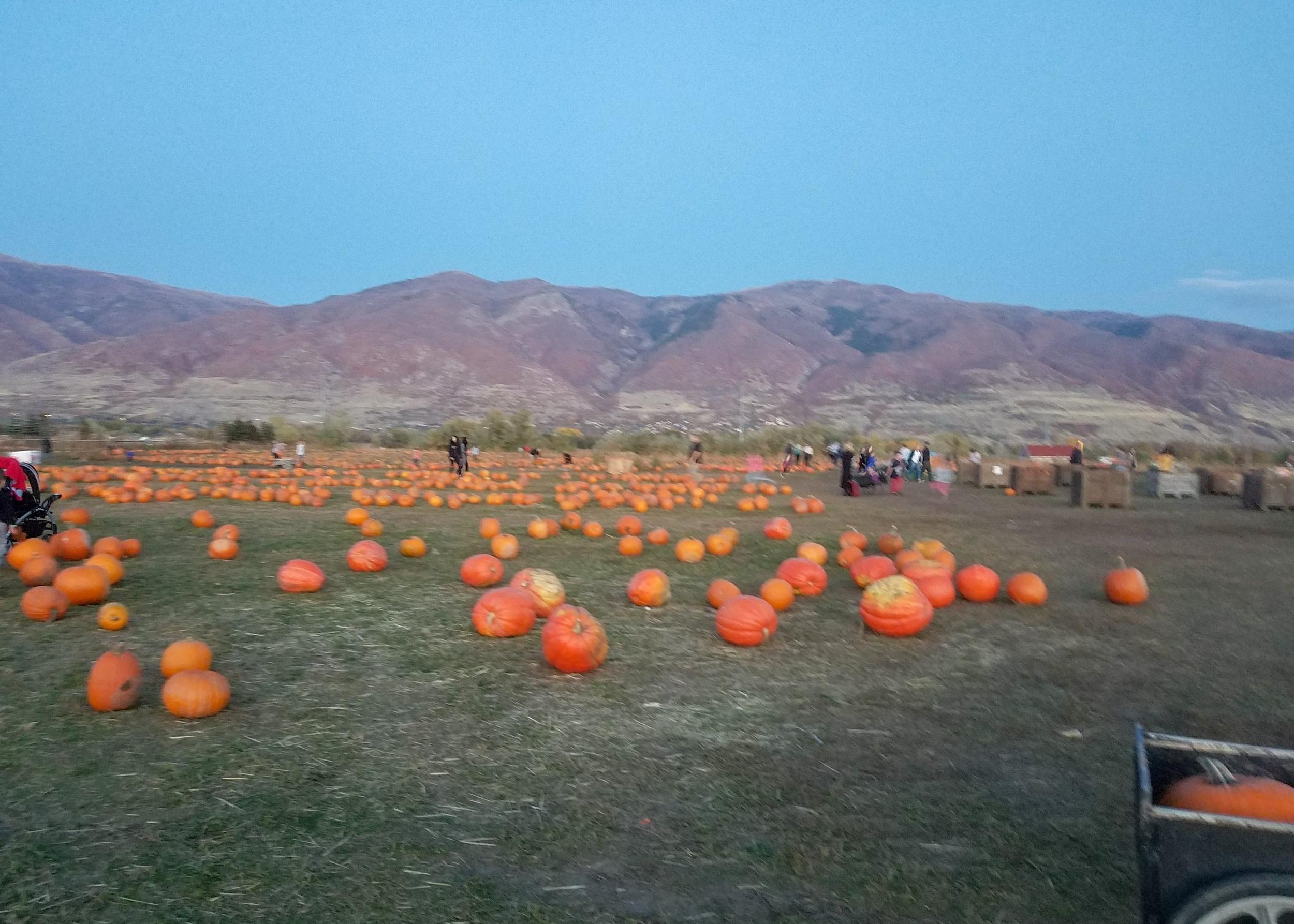 pumpkin patch farmington utah