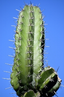Cactuses everywhere all time on the moon Cactuses on mars Cactuses new youtube star