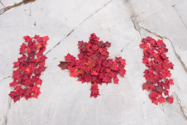 Canada flag red maple on granite